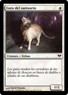 Gato del santuario - Sanctuary Cat